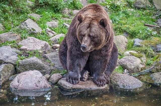 死んだふりはNG?実際のところ、森の中でクマさんに出会ったらどうすりゃいいのさ
